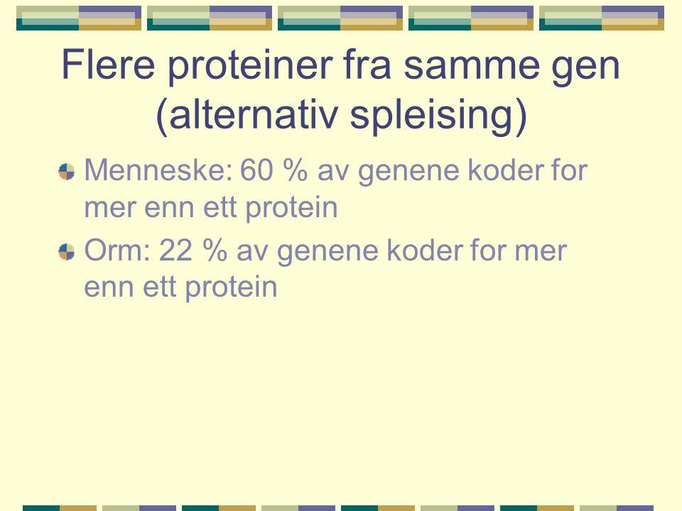 Flere proteiner fra samme gen (alternativ spleising)