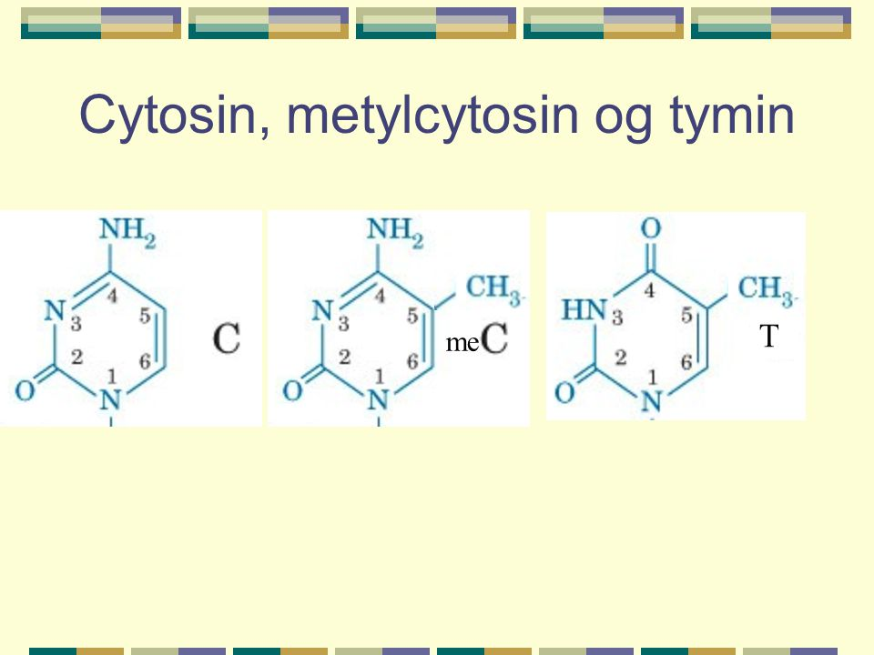Cytosin, metylcytosin og tymin