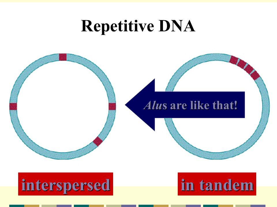 Repetitive DNA I interspersed in tandem Alus are like that!