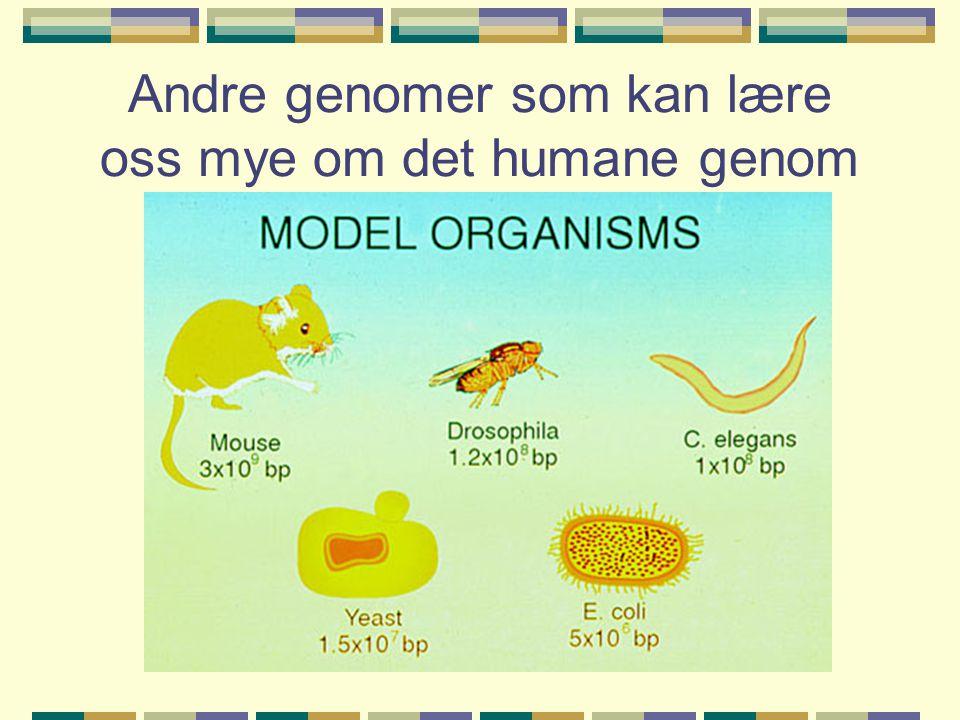Andre genomer som kan lære oss mye om det humane genom