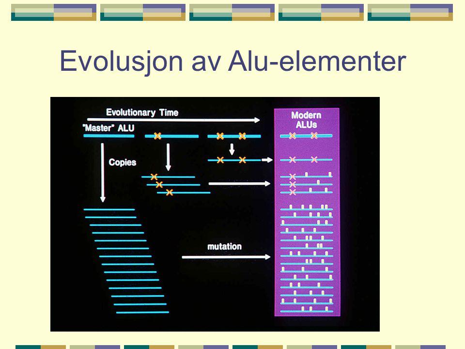 Evolusjon av Alu-elementer