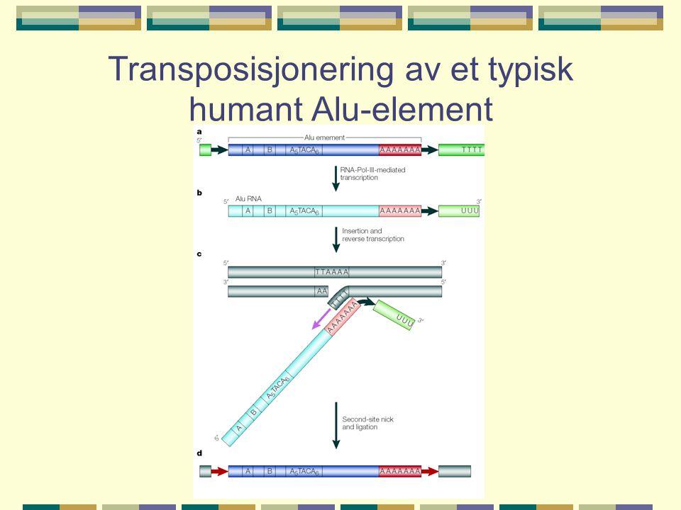 Transposisjonering av et typisk humant Alu-element