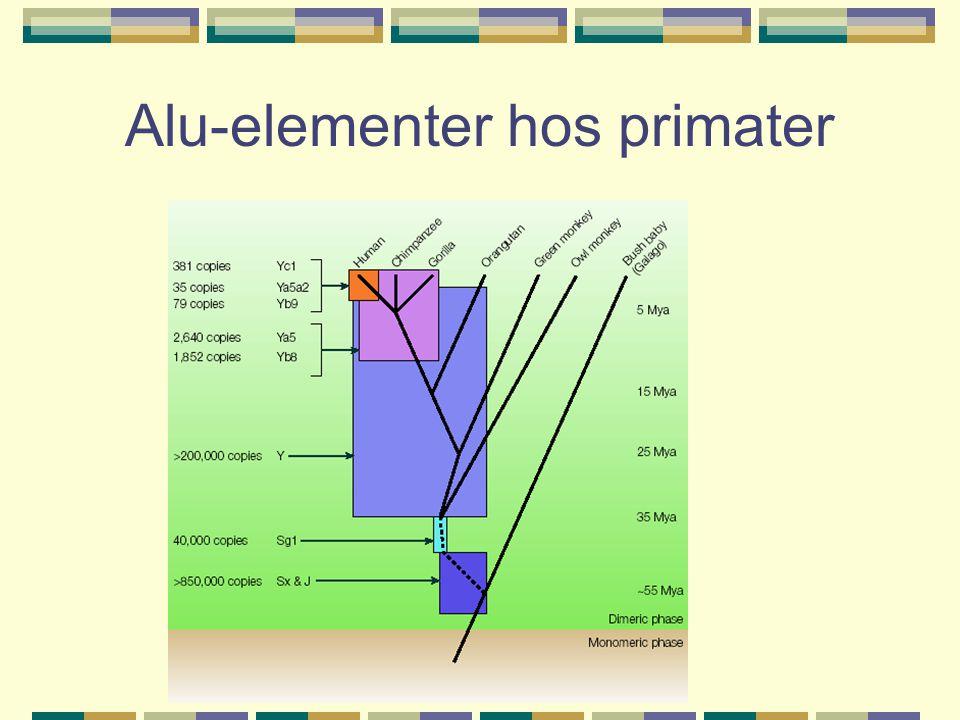 Alu-elementer hos primater