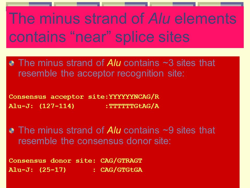 The minus strand of Alu elements contains near splice sites