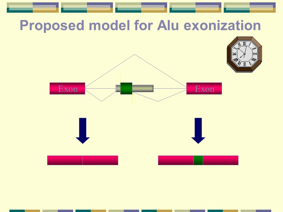 Proposed model for Alu exonization