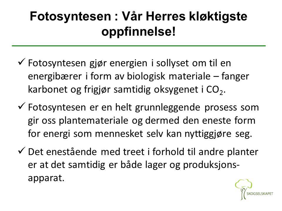 Fotosyntesen : Vår Herres kløktigste oppfinnelse!