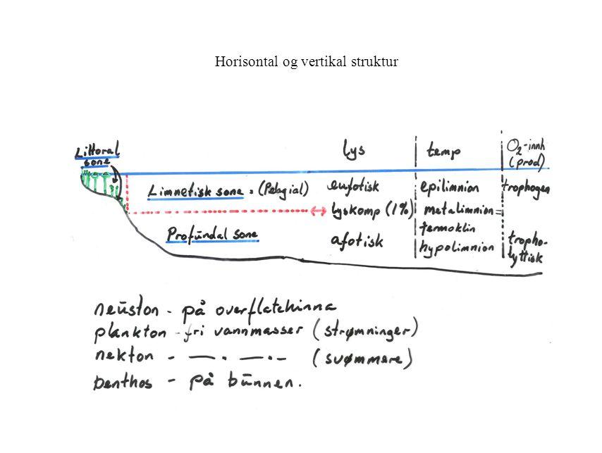 Horisontal og vertikal struktur