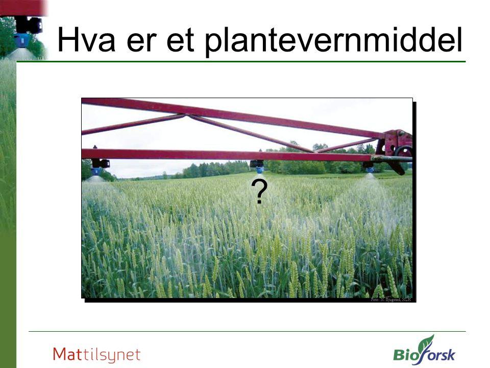 Hva er et plantevernmiddel