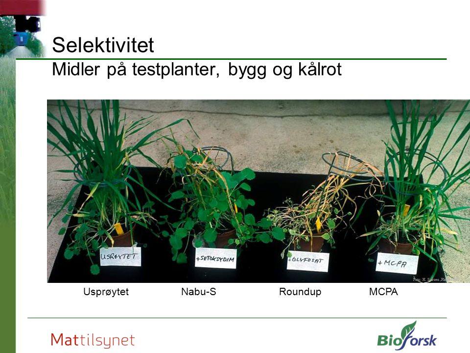 Selektivitet Midler på testplanter, bygg og kålrot