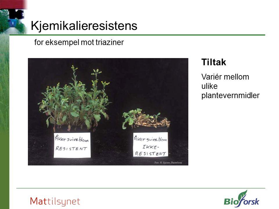 Kjemikalieresistens for eksempel mot triaziner