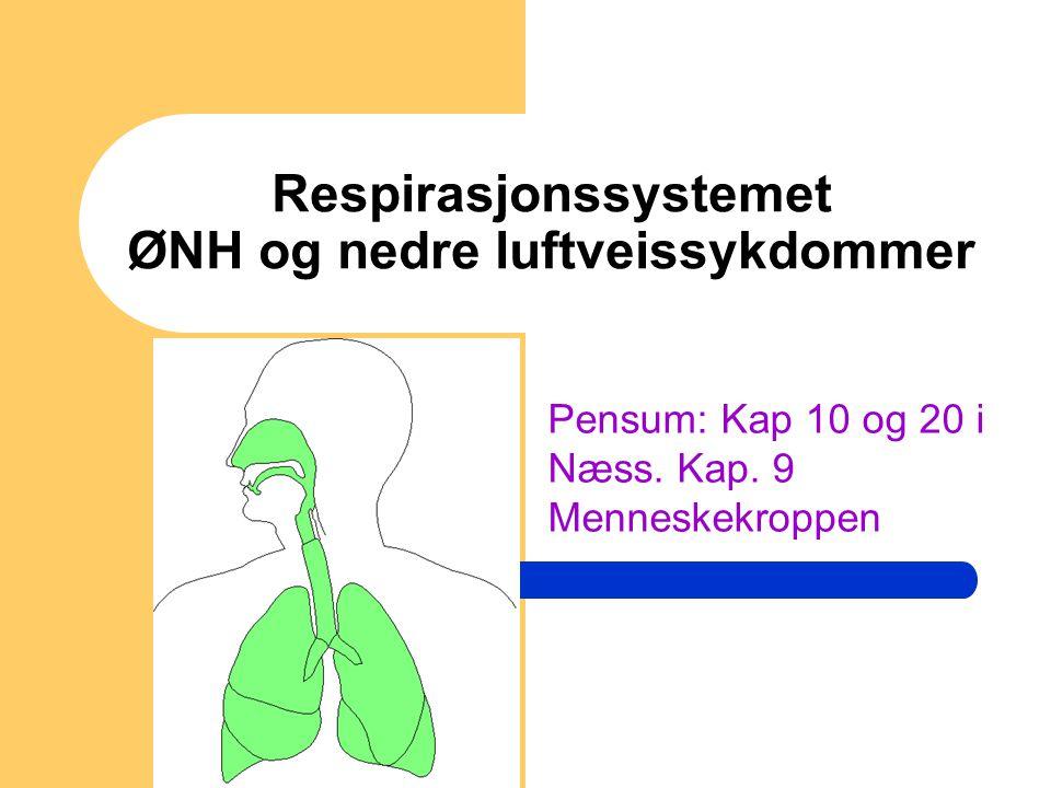 Respirasjonssystemet ØNH og nedre luftveissykdommer