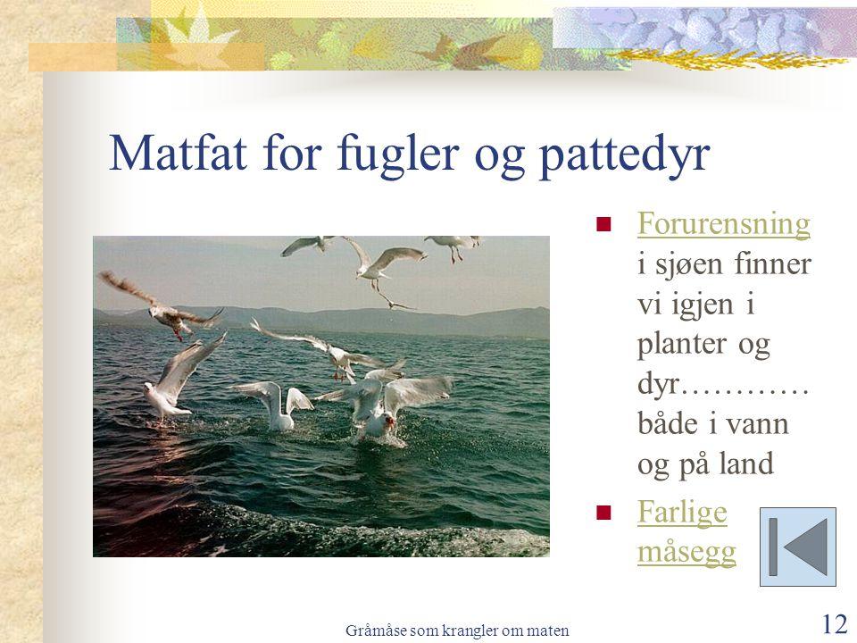 Matfat for fugler og pattedyr
