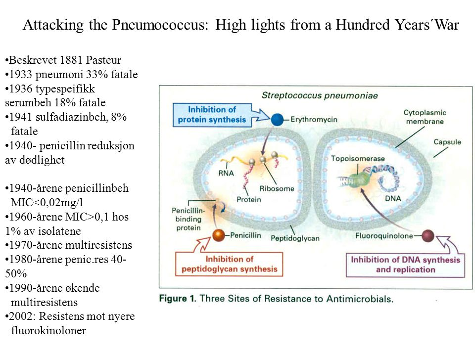 Attacking the Pneumococcus: High lights from a Hundred Years´War