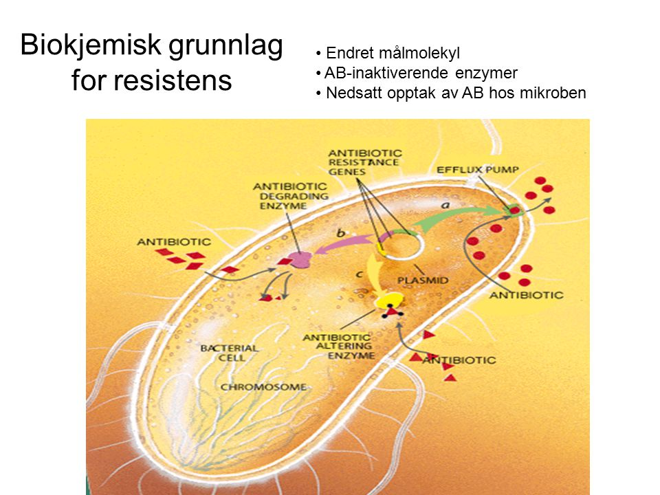 Biokjemisk grunnlag for resistens