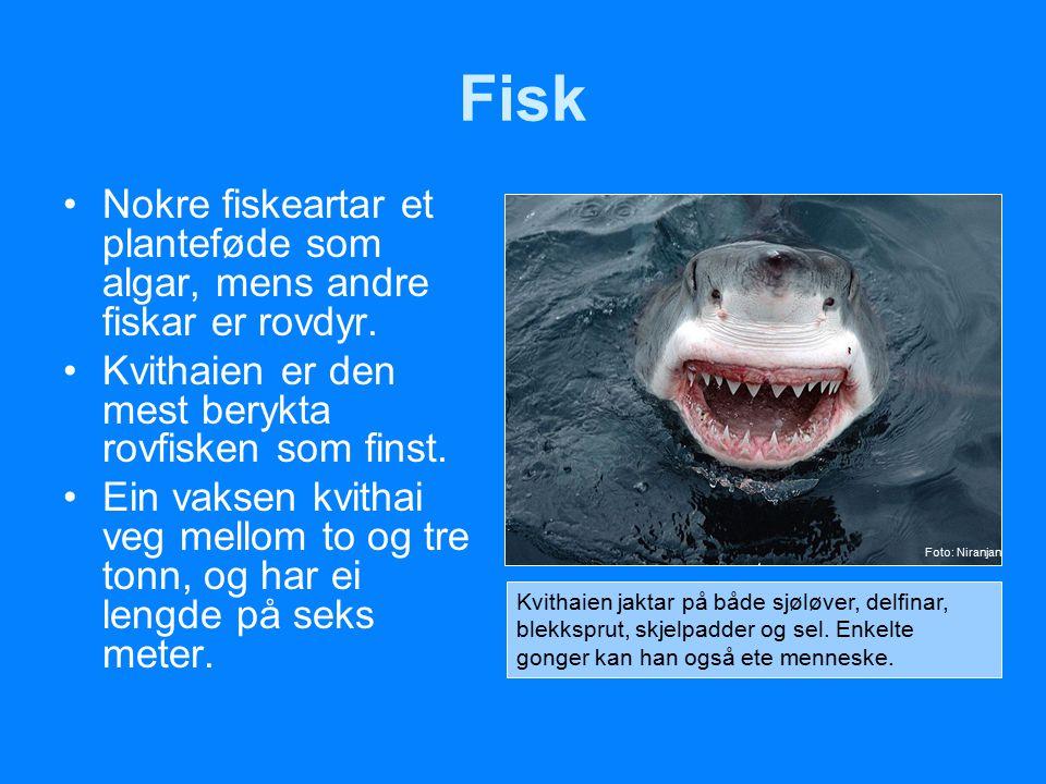 Fisk Nokre fiskeartar et planteføde som algar, mens andre fiskar er rovdyr. Kvithaien er den mest berykta rovfisken som finst.