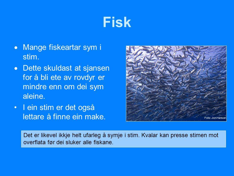 Fisk Mange fiskeartar sym i stim.