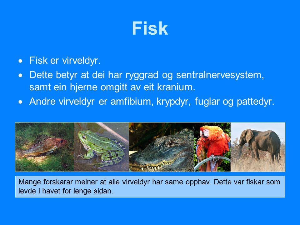 Fisk Fisk er virveldyr. Dette betyr at dei har ryggrad og sentralnervesystem, samt ein hjerne omgitt av eit kranium.