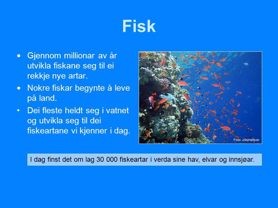 Fisk Gjennom millionar av år utvikla fiskane seg til ei rekkje nye artar. Nokre fiskar begynte å leve på land.