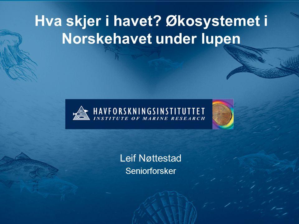 Hva skjer i havet Økosystemet i Norskehavet under lupen