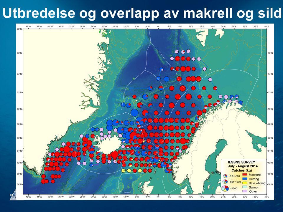 Utbredelse og overlapp av makrell og sild