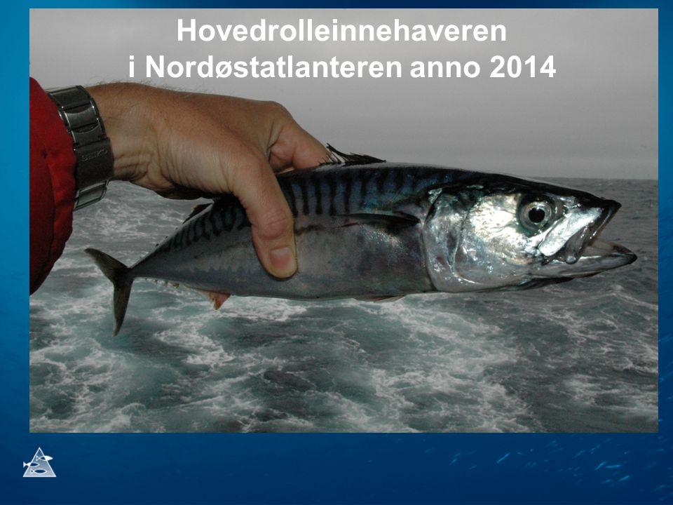 Hovedrolleinnehaveren i Nordøstatlanteren anno 2014
