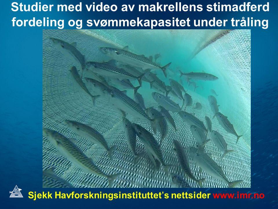 Studier med video av makrellens stimadferd fordeling og svømmekapasitet under tråling