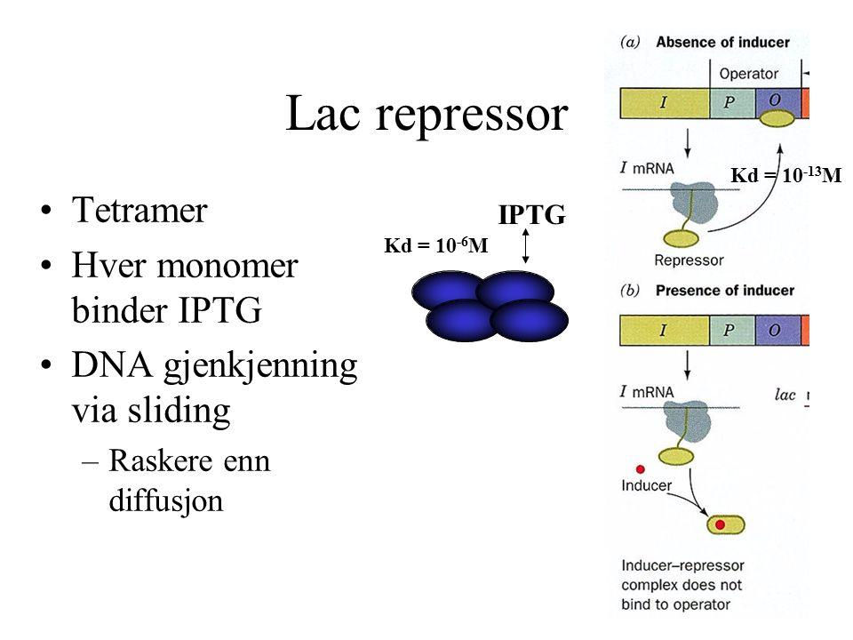 Lac repressor Tetramer Hver monomer binder IPTG