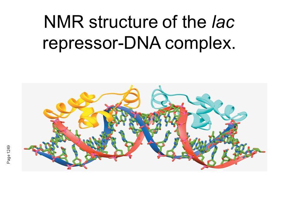 NMR structure of the lac repressor-DNA complex.