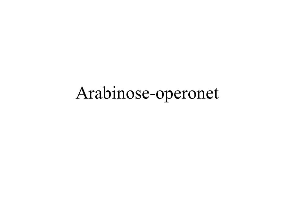 Arabinose-operonet