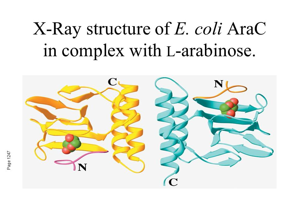 X-Ray structure of E. coli AraC in complex with L-arabinose.