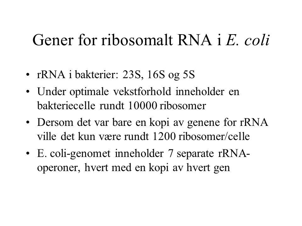 Gener for ribosomalt RNA i E. coli