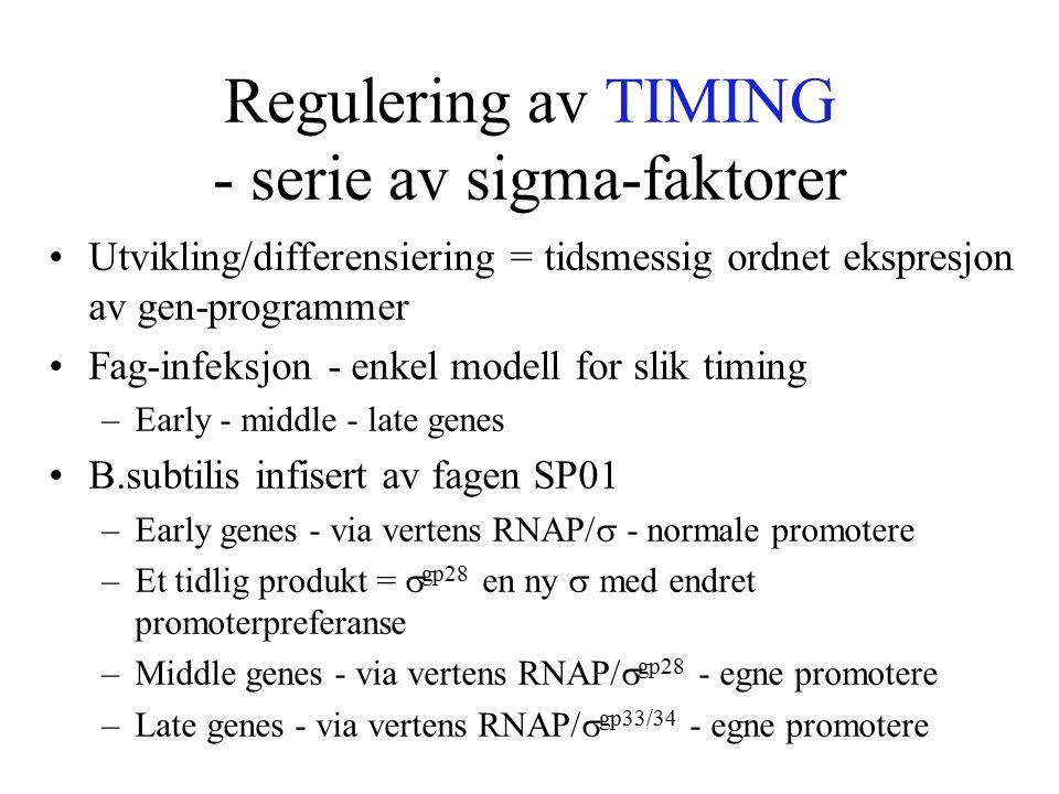 Regulering av TIMING - serie av sigma-faktorer