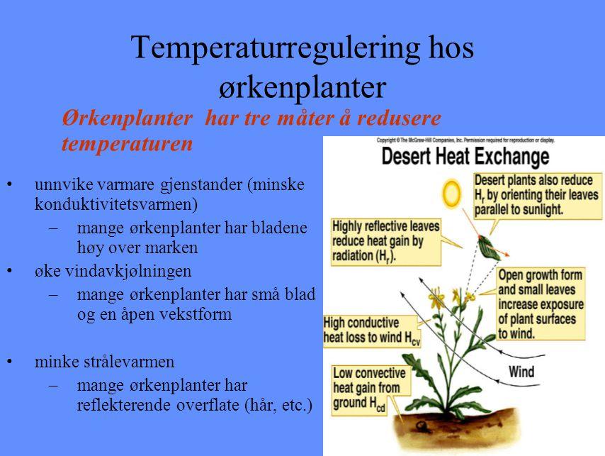 Temperaturregulering hos ørkenplanter