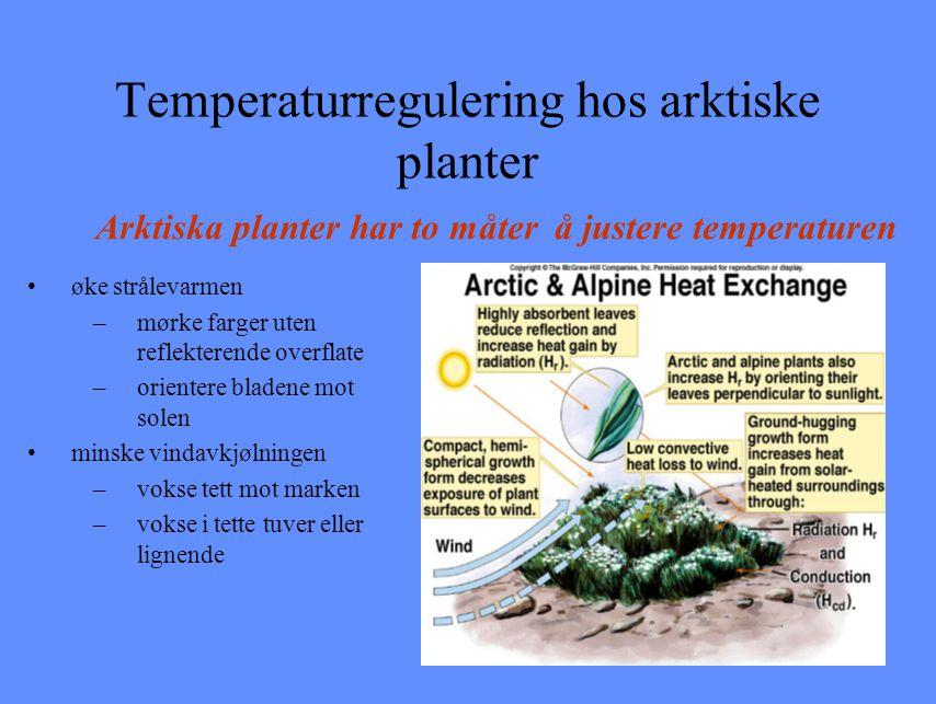 Temperaturregulering hos arktiske planter
