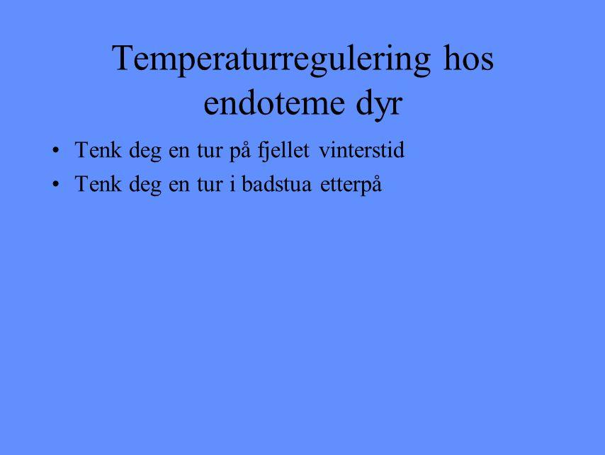 Temperaturregulering hos endoteme dyr