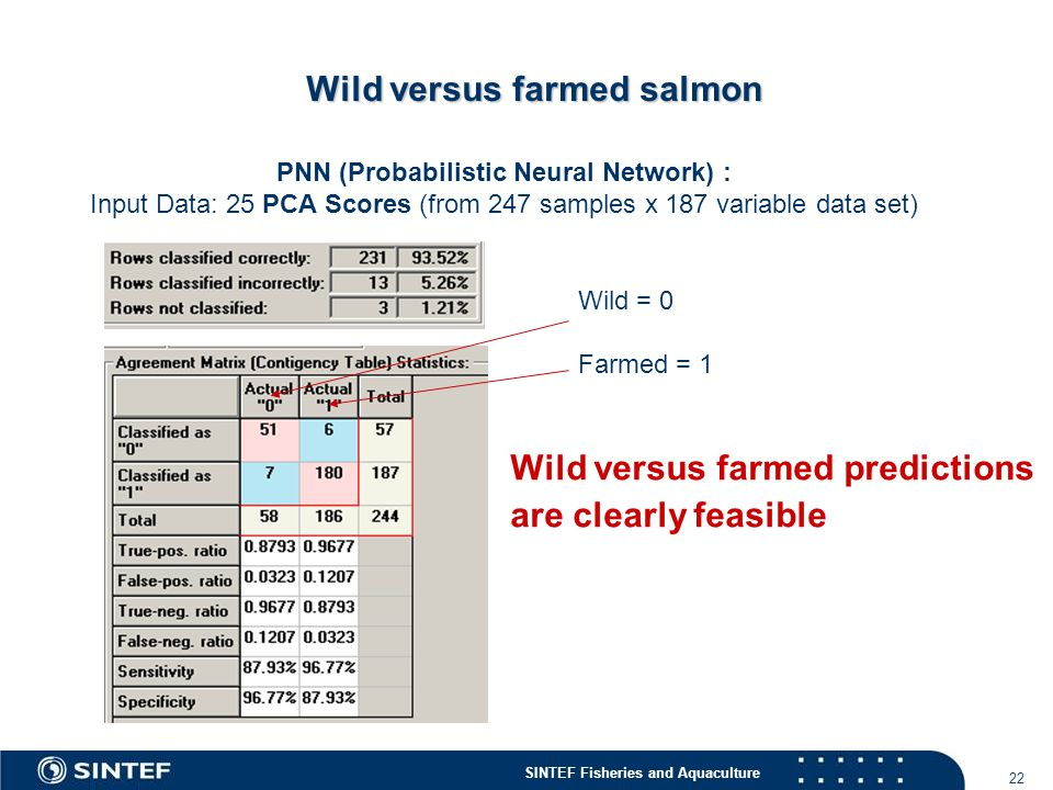 Wild versus farmed salmon