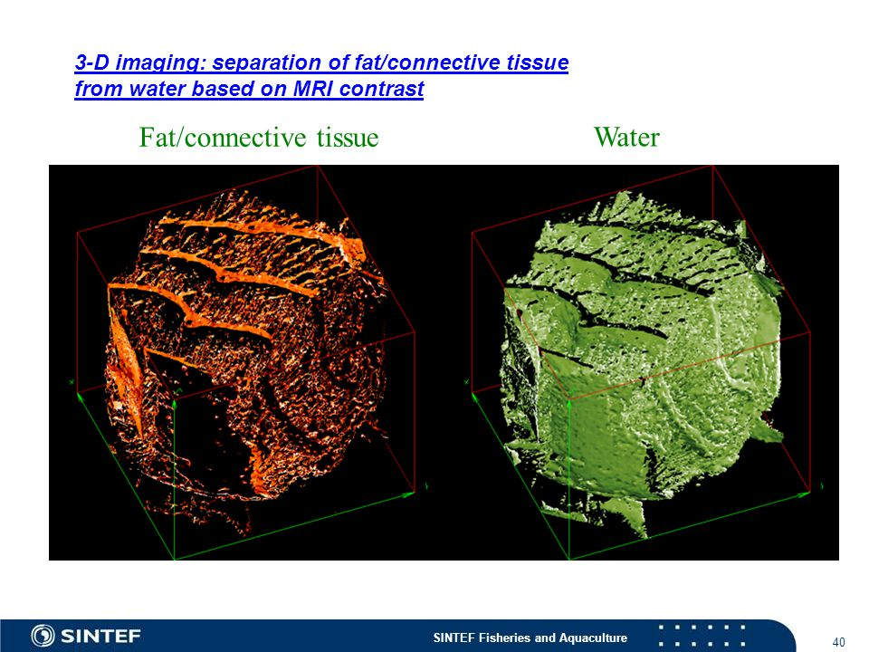 Fat/connective tissue Water