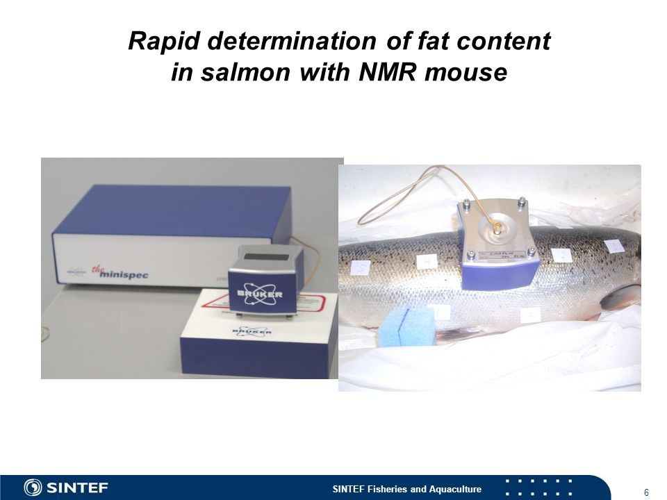 Rapid determination of fat content in salmon with NMR mouse