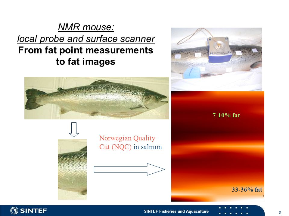 NMR mouse: local probe and surface scanner From fat point measurements to fat images