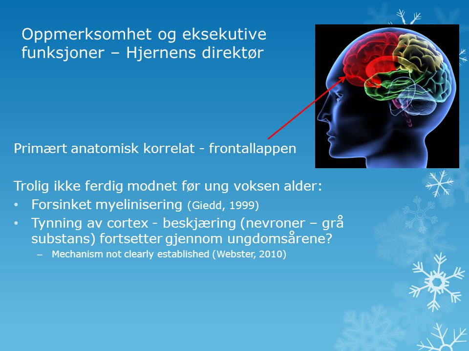 Oppmerksomhet og eksekutive funksjoner – Hjernens direktør