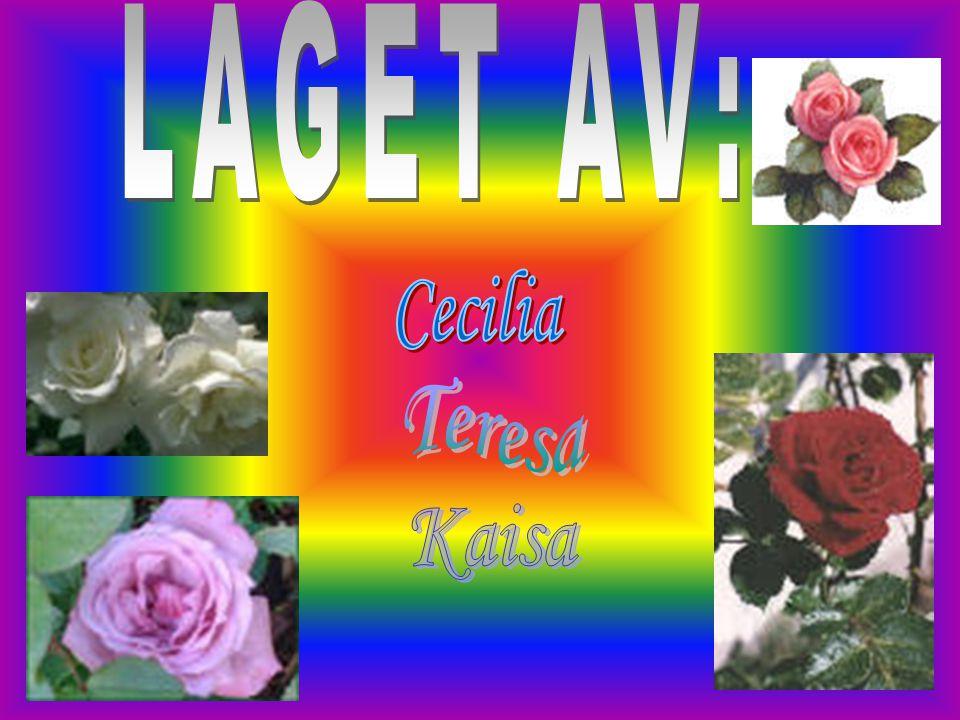 LAGET AV: Cecilia Teresa Kaisa