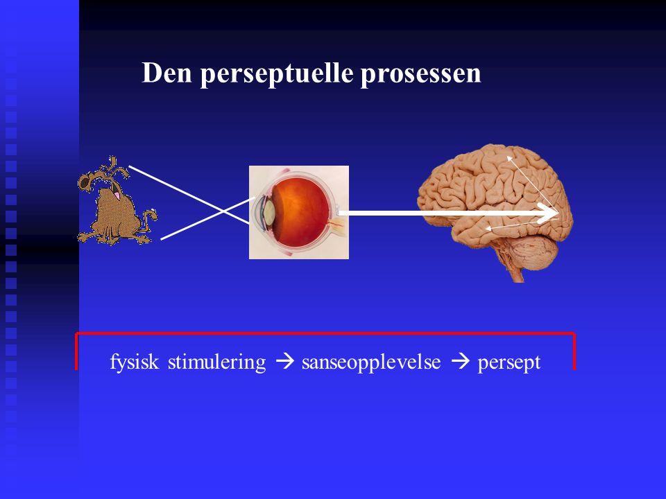 Den perseptuelle prosessen