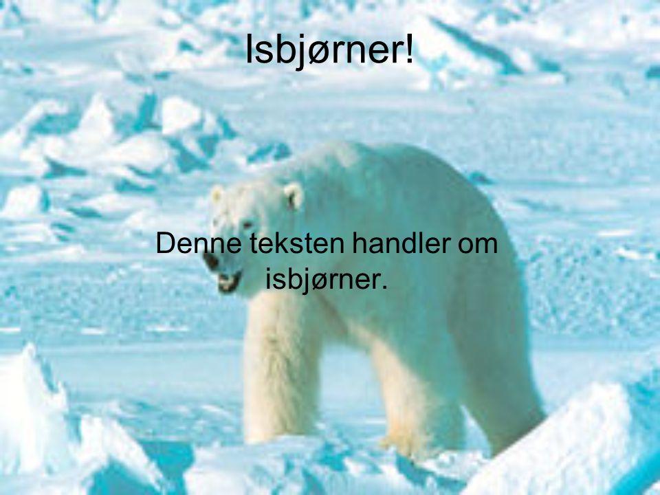 Denne teksten handler om isbjørner.