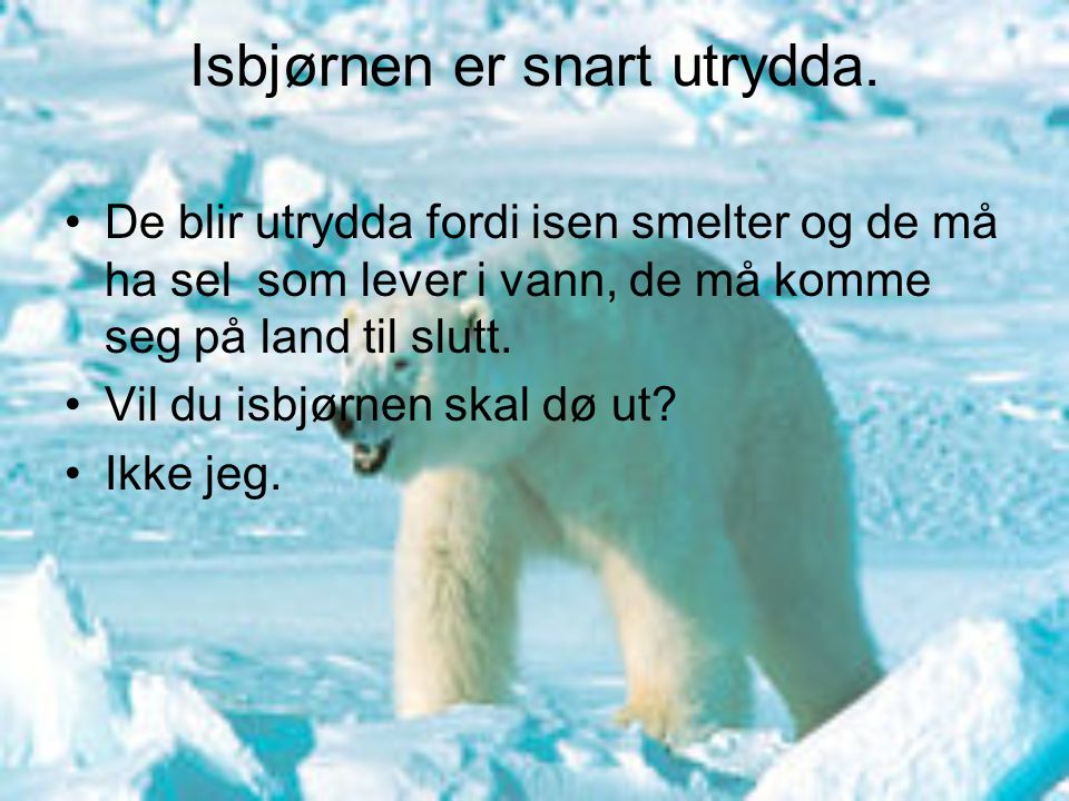 Isbjørnen er snart utrydda.