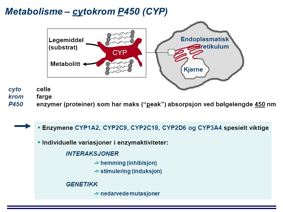 Metabolisme – cytokrom P450 (CYP)