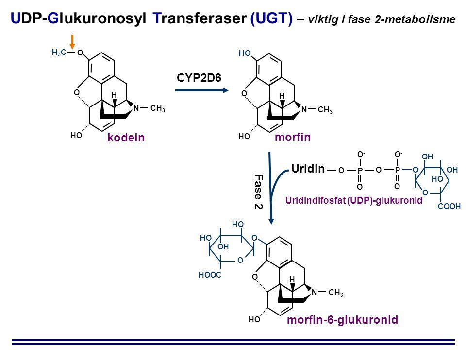 UDP-Glukuronosyl Transferaser (UGT) – viktig i fase 2-metabolisme