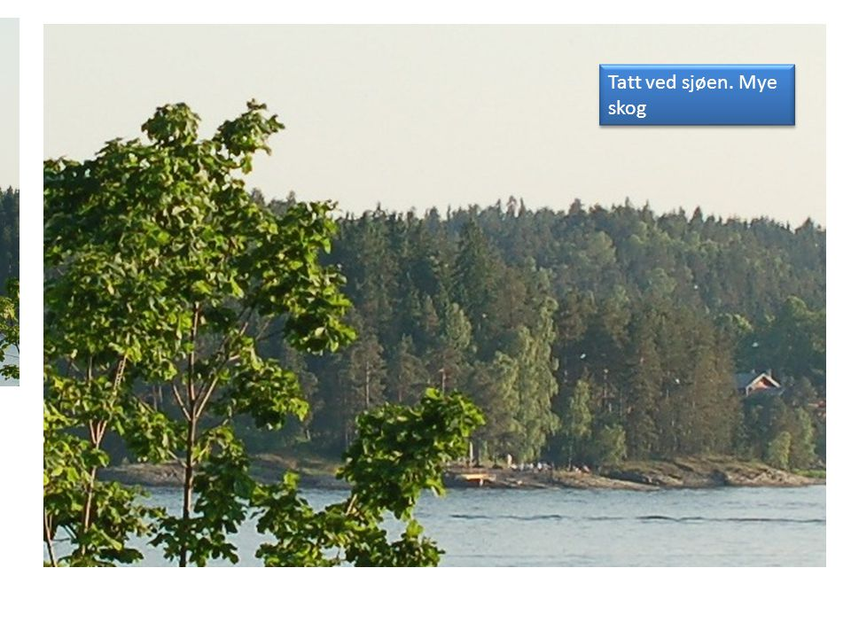 Tatt ved sjøen. Mye skog