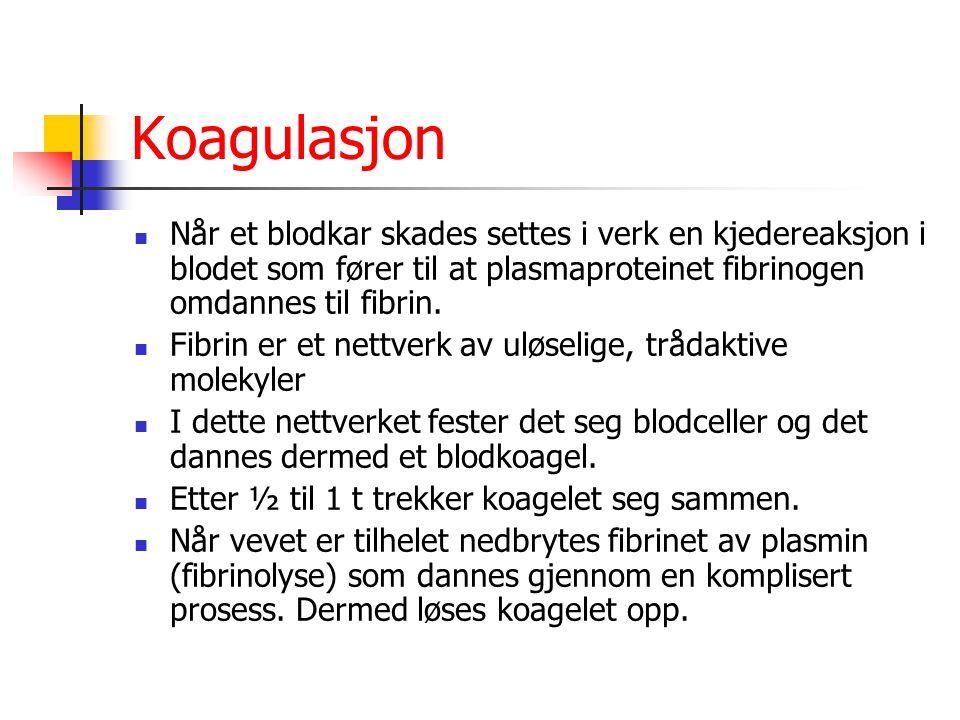 Koagulasjon Når et blodkar skades settes i verk en kjedereaksjon i blodet som fører til at plasmaproteinet fibrinogen omdannes til fibrin.