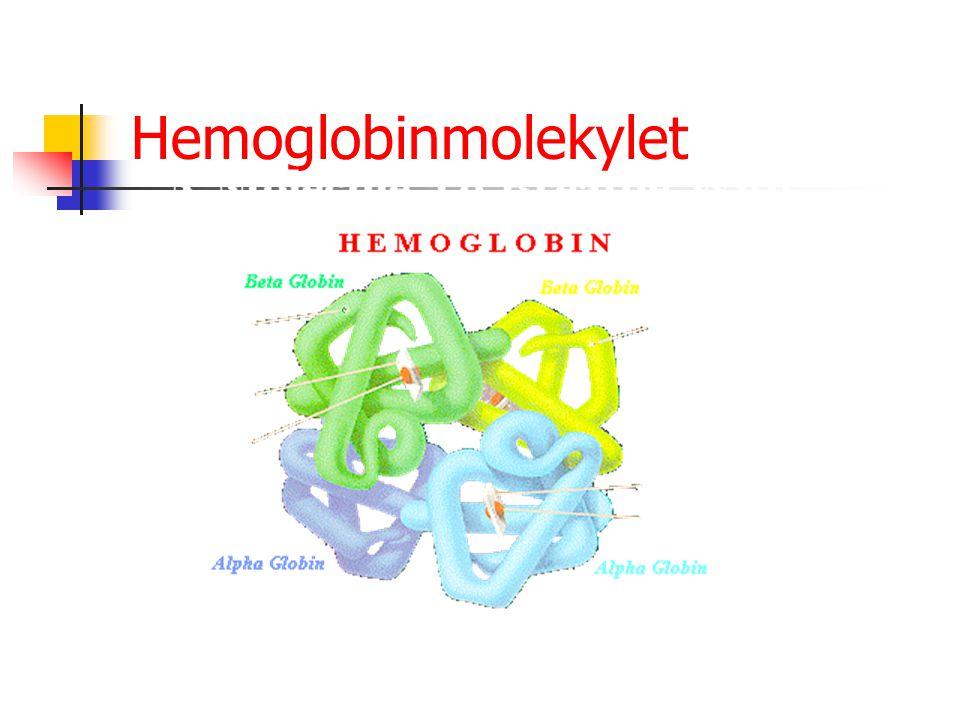 Hemoglobinmolekylet