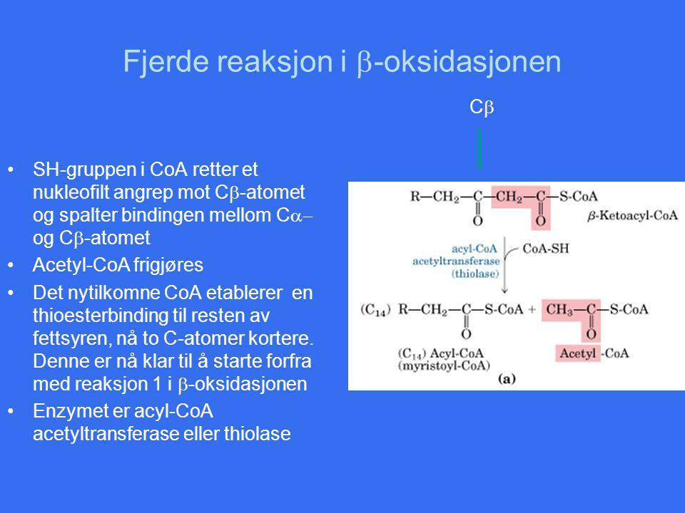 Fjerde reaksjon i b-oksidasjonen